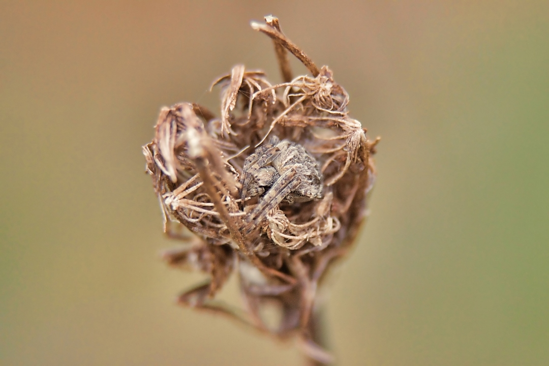 LG-SB Photographie @photographeamontpellier  nature et paysage  araignée