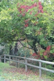 LG-SB Photographie @photographeamontpellier  nature et paysage automne