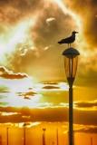 LG-SB Photographie @photographeamontpellier  nature et paysage oiseau